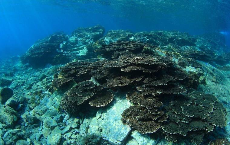 Kushimoto Coral