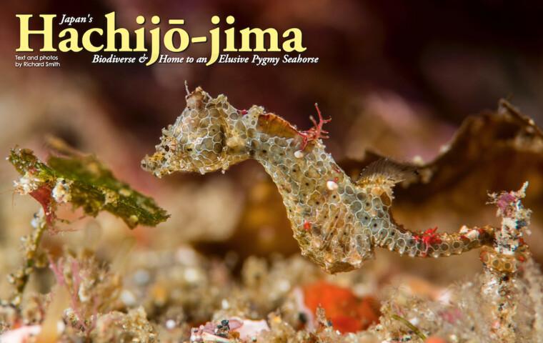 "Japan's Hachijō-jima ""Biodiverse & Home to an Elusive Pygmy Seahorse"""