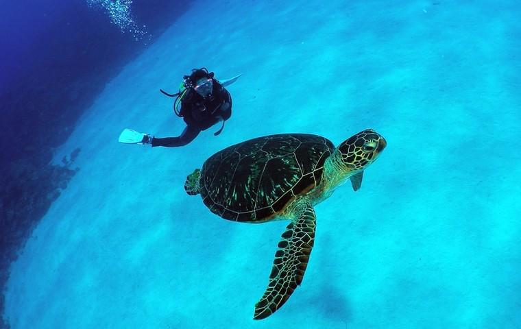 Dive Into Okinawa's Incredible Kerama Islands Marine Park