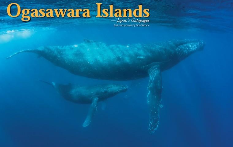 Ogasawara Islands: Japan's Galapagos