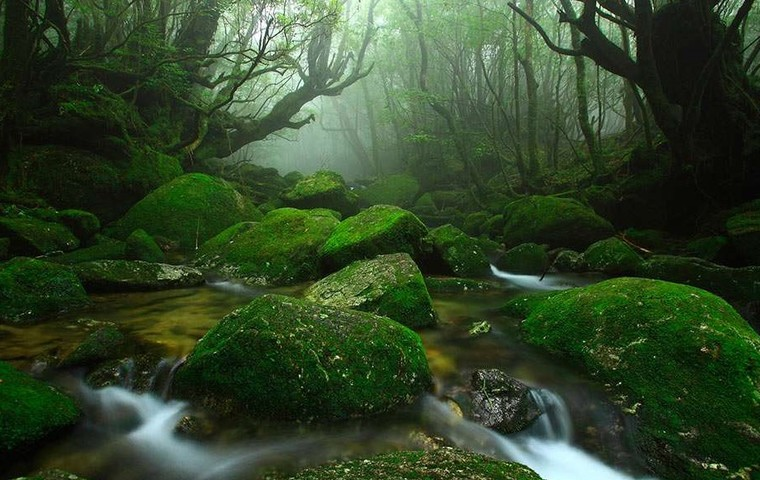 Enjoy trekking in the mystic forest of Yakushima Island