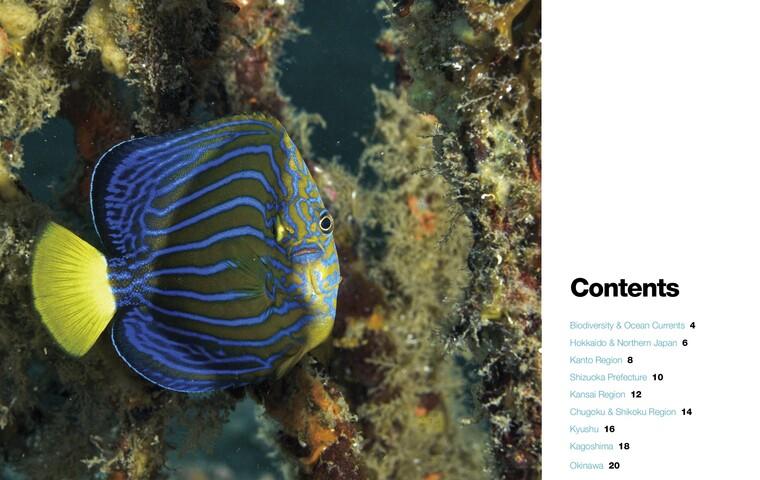 Bio Diversity Diving Spots Japan Page 2